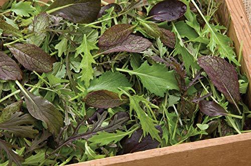 Green Garden Salad - David's Garden Seeds Greens Mix Elegance SV6531 (Green) 500 Non-GMO, Open Pollinated Seeds