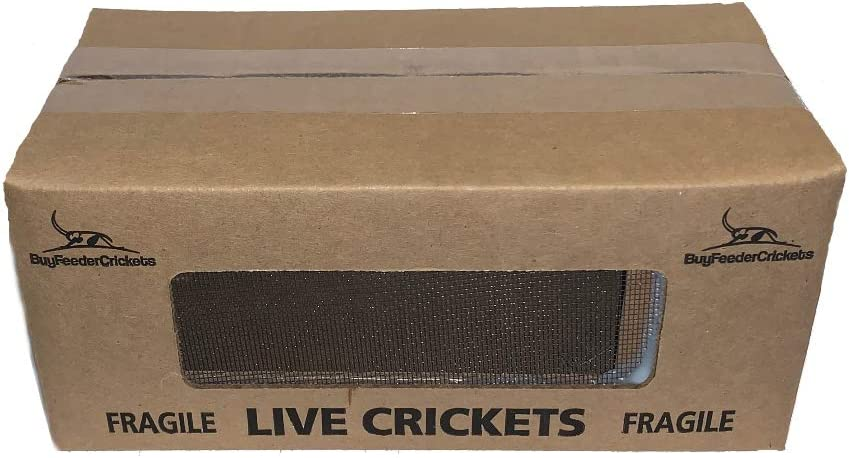 BuyFeederCrickets 500 Live Acheta Crickets (Medium (1/2