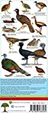 Belize Bird Guide (Laminated Foldout Pocket Field Guide) (English and Spanish Edition)