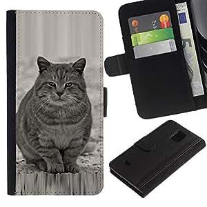 KingStore / Leather Etui en cuir / Samsung Galaxy S5 Mini, SM-G800 / Lindo gato gordo Gris Blanco Furry Bestia