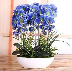 Phalaenopsis de baño sala de estar decoración flores en maceta 2 100 semillas