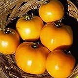 Everwilde Farms - 100 Golden Jubilee Tomato Seeds - Gold Vault Jumbo Seed Packet