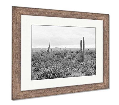 Ashley Framed Prints A Variety Of Vegetation In The Sonoran Desert In Saguaro National Park Tucson, Wall Art Home Decoration, Black/White, 34x40 (frame size), Rustic Barn Wood Frame, AG6550183 Sonoran Desert Saguaro National Park