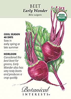 Early Wonder Beet Seeds - 2 grams - Organic by Hirts: Seed; Vegetable