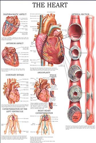 - The heart: E-chart, full illustrated