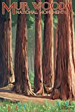 Muir Woods National Monument, California - Deer and Grove