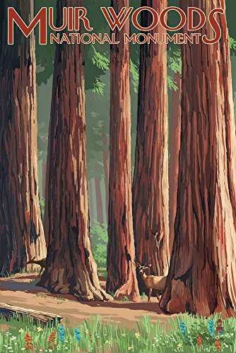 Muir Woods National Monument, California - Deer and Grove (12x18 Art Print, Wall Decor Travel Poster)