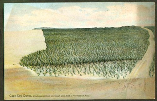 Government Grass Dunes Proviincetown MA postcard from The Jumping Frog