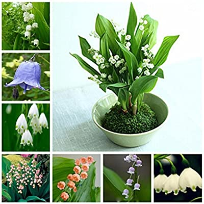 CANHOT Garden - Fragrant Lily of The Valley Flowers Variegated Seeds Rare Ornamental Seeds Perennial Resistant Bonsai Flowers with Comfortable Smell : Garden & Outdoor