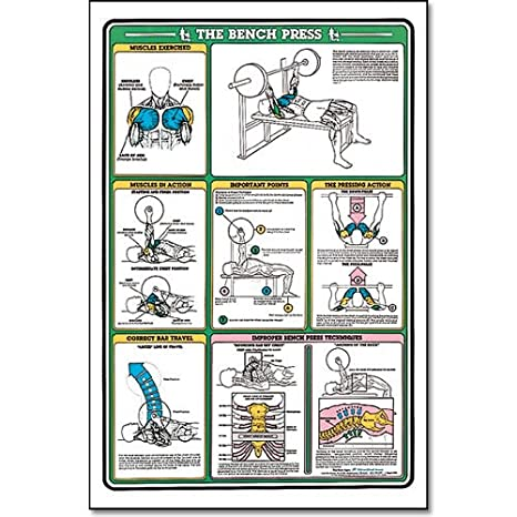 Buy Algra Fitnus Chart Bench Press Instruction Card Online At Low