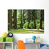 Forest Wall Mural by Wallmonkeys Peel and Stick Graphic (72 in W x 48 in H) WM209508