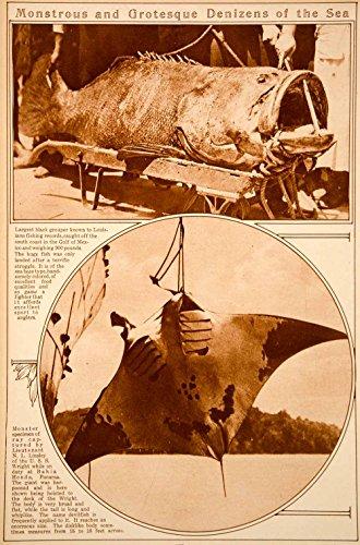 Eagle Ray Stingray (1923 Rotogravure Fish Black Grouper Devil Fish Eagle Ray Stingray Marine Life - Original)