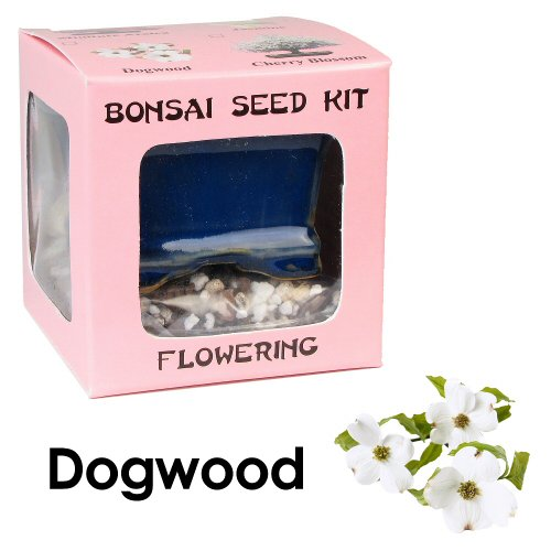 Eve's Dogwood Seed Kit, Flowering, Complete Kit to Grow Dogwood Bonsai from Seed (Grow Tree Dogwood)