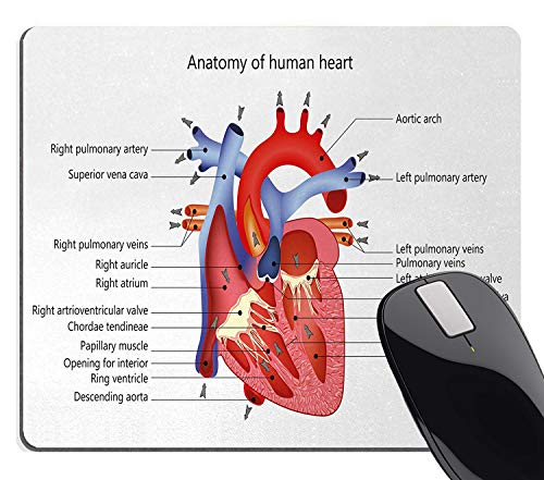 Wknoon Educational Mouse Pad for Work, Medical Structure of The Hearts Human Body Anatomy Organ Veins Cardiology