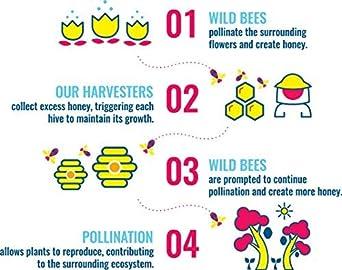 Heavenly Organics - 100% miel blanca cruda orgánica (22 oz ...