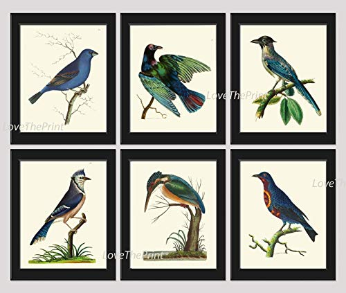 (Bird Print Set of 6 Prints Antique Beautiful Blue Birds Blue Jay Blue Grosbeak Chaterrer Bird Cyanean Crow Home Room Decor Wall Art Unframed NODD )