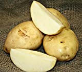 buy 5 lb. SEED POTATOES - Kennebec Russet - Organic - ORDER NOW for FALL PLANTING now, new 2020-2019 bestseller, review and Photo, best price $13.49