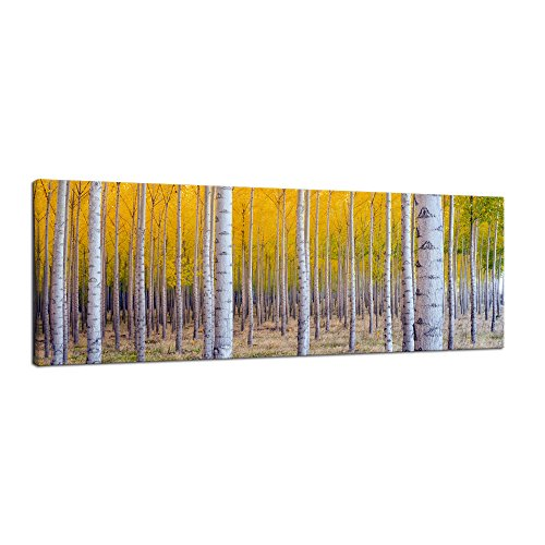 Pyradecor Giclee Canvas Prints Wall Art White Birch Trees Pictures Paintings for Living Room Home Decorations Large Autumn Forest Modern Stretched and Framed Yellow Landscape Artwork 48x16 Inch by Pyradecor
