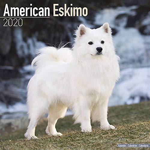 American Eskimo Calendar - Dog Breed Calendars - 2019 - 2020 Wall Calendars - 16 Month by Avonside (Multilingual Edition) by