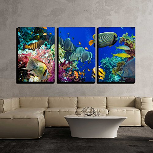 wall26 - 3 Piece Canvas Wall Art - Colorful Underwater Offshore Rocky Reef with Coral and Sponges - Modern Home Decor Stretched and Framed Ready to Hang - 24