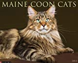 Maine Coon Cats 2013 Wall Calendar