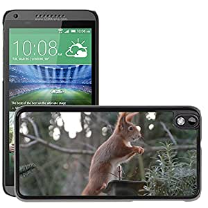 GoGoMobile Slim Protector Hard Shell Cover Case // M00117722 Squirrel Animals Nature Nager Fur // HTC Desire 816