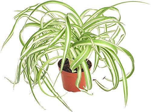 Shop Succulents |