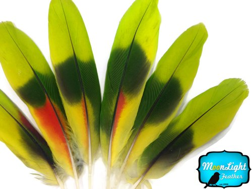 Parrot Feathers, Lime Green Red Amazon Parrot Wing Feathers (Rare) - 4 Pieces Fly Tying, Jewelry, Craft, Smudging