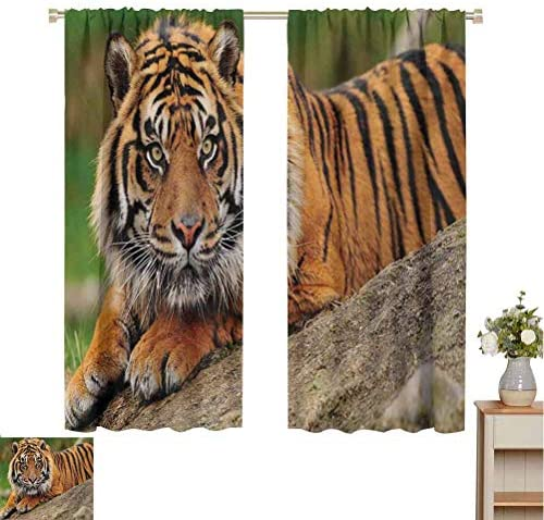 June Gissing Tiger Curtain Decoration Noble Beast Crouching on a Rock Sumatrian Large Cat Beautiful Nature Photography D cor Darkening Curtains W63 x L84 Multicolor