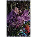 Orchids: Journal/Planner (In The Garden)