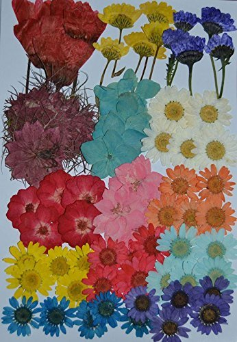Amazon Lovediylife Multiple Dried Flowers Pink Larkspur Mini