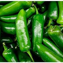 Fresh Jalapeno Peppers 1 lb