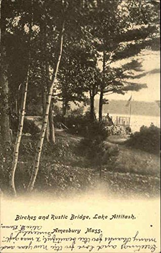 - Birches and Rustic Bridge, Lake Attitash Amesbury, Massachusetts Original Vintage Postcard