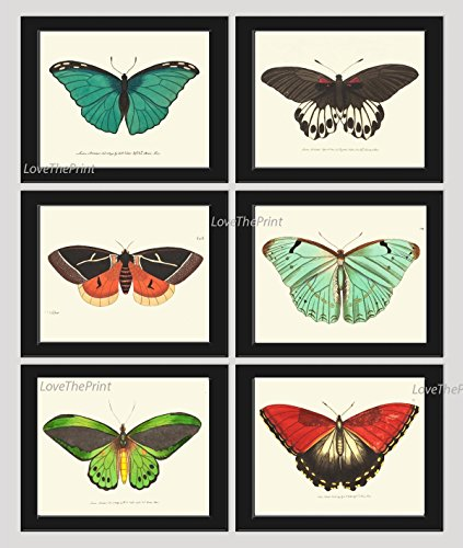 (Butterfly Print Set of 6 Prints Antique Art Beautiful Colored Colorful Aqua Red Green Ivory Background Natural Science Summer Garden Nature Home Room Wall Decor Unframed NODD)