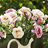 super1798 50Pcs Garden Balcony Plant Eustoma Flower Lisianthus Seeds Plant - 5