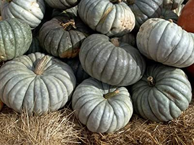 Winter Squash, Sweet Meat Squash Seeds