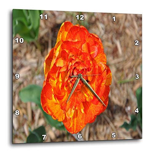 3dRose Dreamscapes by Leslie - Flowers - Orange and Yellow Double Tulip - 15x15 Wall Clock (DPP_314269_3)