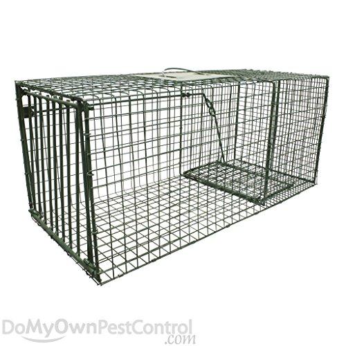 Duke Traps Heavy Duty Raccoon and Armadillo Trap (1112) by DavesPestDefense