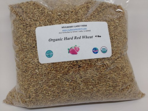 Hard Red Wheat Berries 4 lbs (Four Pounds) USDA Certified Organic Non-GMO BULK by Mulberry Lane Farms