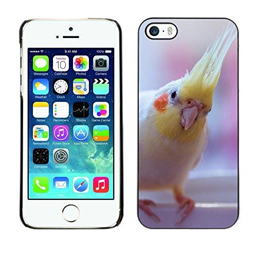 Premio Sottile Slim Cassa Custodia Case Cover Shell // F00000084 oiseau // Apple iPhone 5 5S 5G