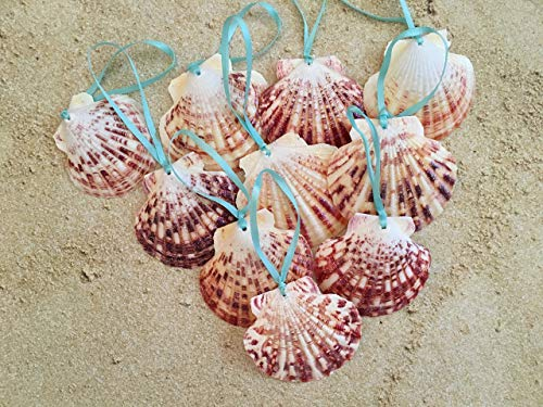 - Glitter Seashell Beach Christmas Ornaments with Turquoise Ribbon, 10