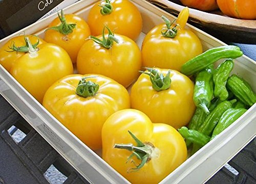 50+ ORGANICALLY GROWN GIANT Brandywine Yellow Tomato Seeds, Heirloom NON-GMO, Meaty, Indeterminate, Open-Pollinated, Productive, Sweet, Delicious, From USA