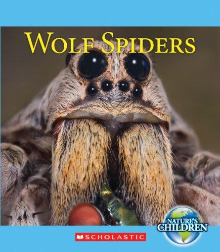 Wolf Spiders  Natures Children