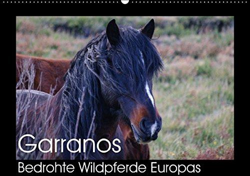 Garranos - Bedrohte Wildpferde Europas (Wandkalender 2015 DIN A2 quer): Kalender zum Schutzprojekt dieser seltenen europäischen Wildpferderasse (Monatskalender, 14 Seiten)