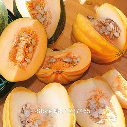 Plentree Imported Real 10pcs Table Queen Acorn Squash, Cucurbita a Potted s Home Garden -