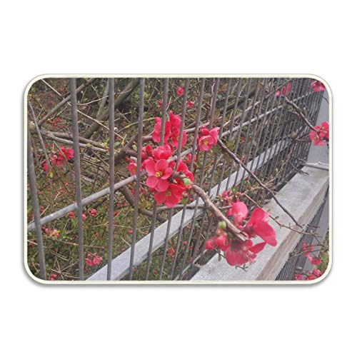 Flowers Trying to Escape Front Door Mat Large Outdoor Indoor Entrance Doormat -