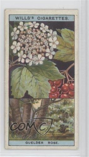 Guelder Rose COMC REVIEWED Good to VG-EX (Trading Card) 1924 Wills Flowering Trees & Shrubs - Tobacco [Base] #22