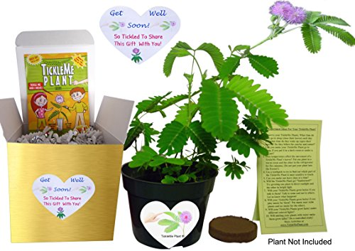 GET WELL GIFT PLANT - TickleMe Plant Gift Box Set - Grow the Plant that closes its leaves when you TICKLE it or blow it a KISS! It also grows Pink Cotton Candy Like Flowers! Sure to make them SMILE. - Feel Better Gift