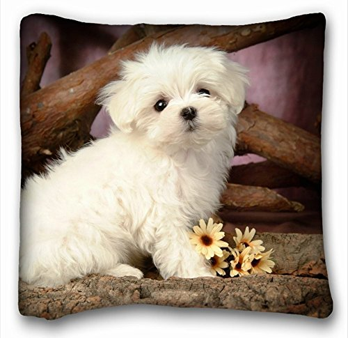 Home Decorative Square Throw Pillow Case Animals Cute Maltese Puppies 18 x 18 Inches