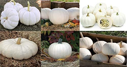 - David's Garden Seeds Collection Set Pumpkin White Hybrid 9043SV (Multi) 6 Varieties 150 Seeds (Non-GMO, Hybrid)